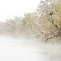 Snowy Bayou by Andy Crawford