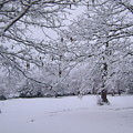 Snowy Branches by Deborah Reed