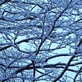 Snowy Branches Landscape Photograph by Kristen Fox