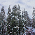 Snowy Christmas At Big Bear Lake by Tommy Anderson