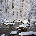 Snowy Day by Ken Curtis