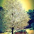 Snowy Days by Donna Bentley