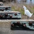 Snowy Egret #2 by Tim Bond