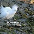 Snowy Egret 9053 by Captain Debbie Ritter