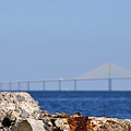 Snowy Egret And Sunshine Skyway Bridge by David Lee Thompson