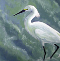 Snowy Egret In Water by Adam Johnson