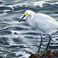 Snowy Egret On Jetty Rock by Adam Johnson