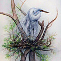 Snowy Egret On Nest by Laurie Tietjen