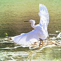 Snowy Egret Over Golden Pond by Carol Groenen