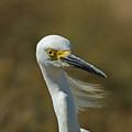 Snowy Egret Profile 2 by Ernie Echols