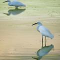 Snowy Egret Reflections  by Saija Lehtonen