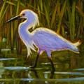 Snowy Egret by Sonia Kane