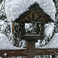 Snowy Feeder by Bonnie Bruno