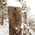 Snowy Fence Post by Julie Gropp