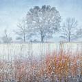 Snowy Field 2 - Winter At Retzer Nature Center  by Jennifer Rondinelli Reilly - Fine Art Photography