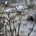 Snowy Flowers  by Stefan Pettersson