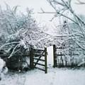 Snowy Garden Gate Three by Mo Barton