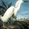 Snowy Heron by Granger