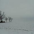 Snowy Illinois Field by David Junod