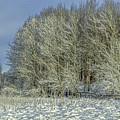 Snowy Landscape #f3 by Leif Sohlman