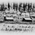 Snowy Log Cabins At Valley Forge by Bill Cannon