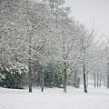 Snowy Morning by Raelene Goddard