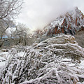 Snowy Mountains In Zion by Daniel Woodrum