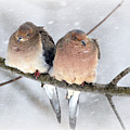 Snowy Mourning Dove Pair by Lila Fisher-Wenzel