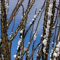 Snowy Ocotillo Sky by Eric Rosenwald