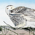 Snowy Owl by Barry Levy