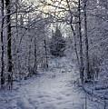 Snowy Path by Bryan Benson