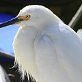 Snowy Profile by Shoal Hollingsworth