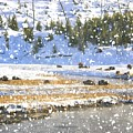 Snowy River by Image Takers Photography LLC - Carol Haddon