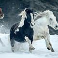 Snowy Run by Jack Bell