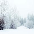 Snowy Sunday by Tara Turner