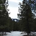 Snowy Trail by Dan Hassett