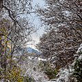 Snowy Trail by Michael Putthoff