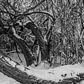 Snowy Tree Bench In Black And White by Michael Putthoff