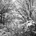 Snowy Trees In Black And White by Jill Lang