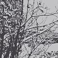 Snowy Trees by Rachel Vdolek