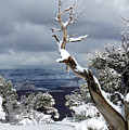 Snowy View by Laurel Powell