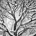 Snowy Winter Intertwine by James BO Insogna