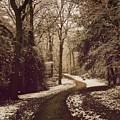 Snowy Woodland Walk One by Mo Barton