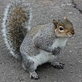 So.... Got Nuts? by Vicki Spindler