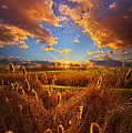 So Long I Can't Remember by Phil Koch