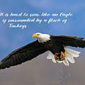 Soar Like An Eagle  If You Can by Elaine Plesser