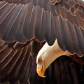 Soar Like An Eagle by Pauline Darrow