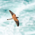 Soaring Above The Churning Sea by Rodney Appleby