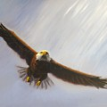 Soaring Eagle by Greg Neal