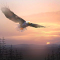 Soaring Free by Paul Sachtleben